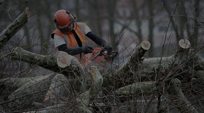 Great Falls Tree Service